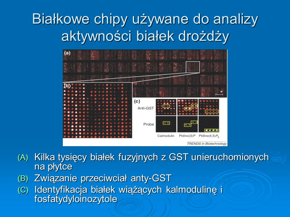Białkowe chipy używane do analizy aktywności białek drożdży