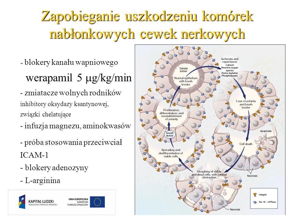 Zapobieganie uszkodzeniu komórek nabłonkowych cewek nerkowych