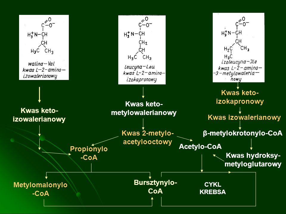 Kwas keto-izokapronowy