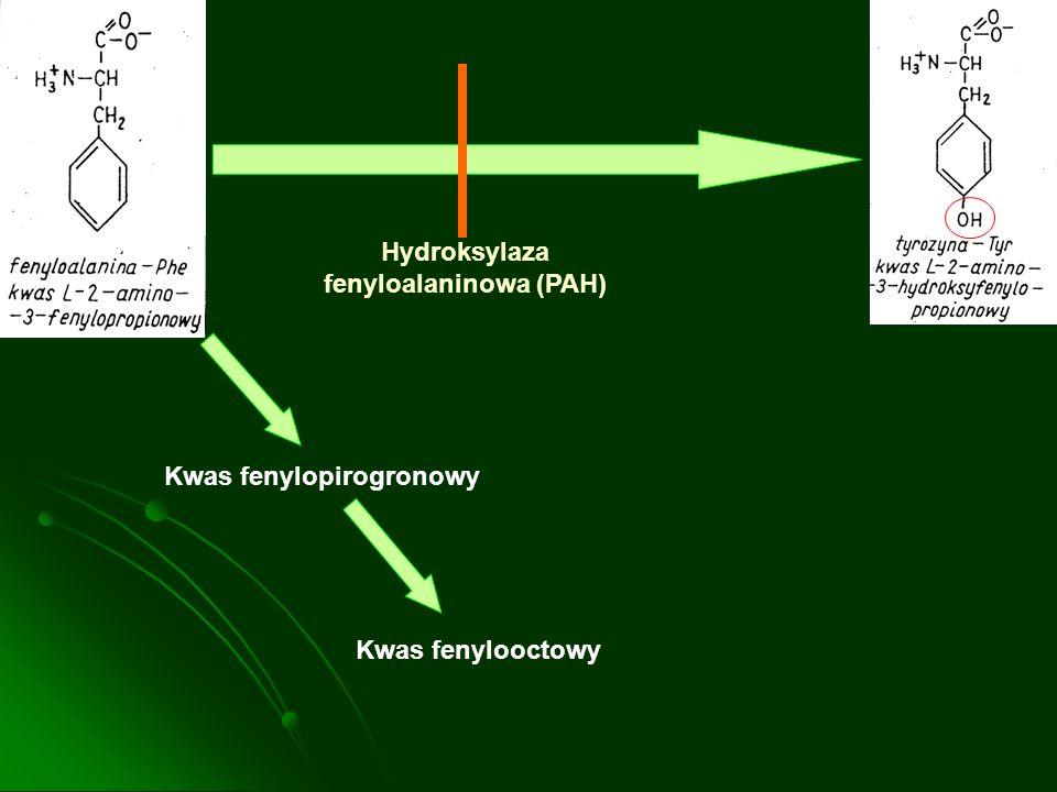 Hydroksylaza fenyloalaninowa (PAH)