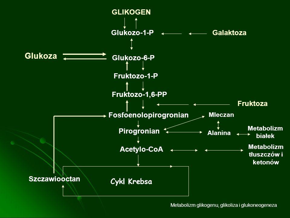 Fosfoenolopirogronian Metabolizm tłuszczów i ketonów