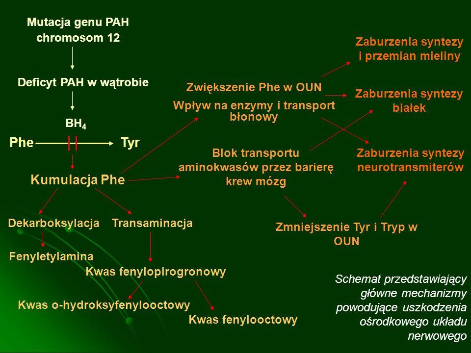 Phe Tyr Kumulacja Phe Mutacja genu PAH chromosom 12
