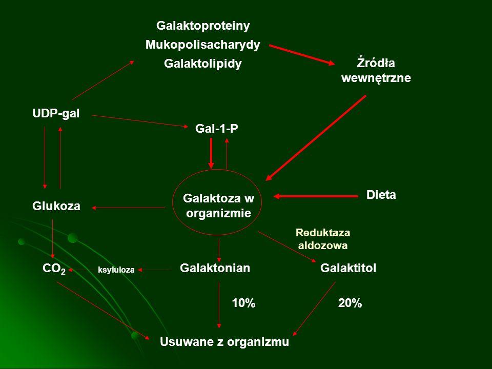 Galaktoza w organizmie