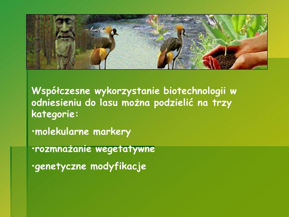 Współczesne wykorzystanie biotechnologii w odniesieniu do lasu można podzielić na trzy kategorie:
