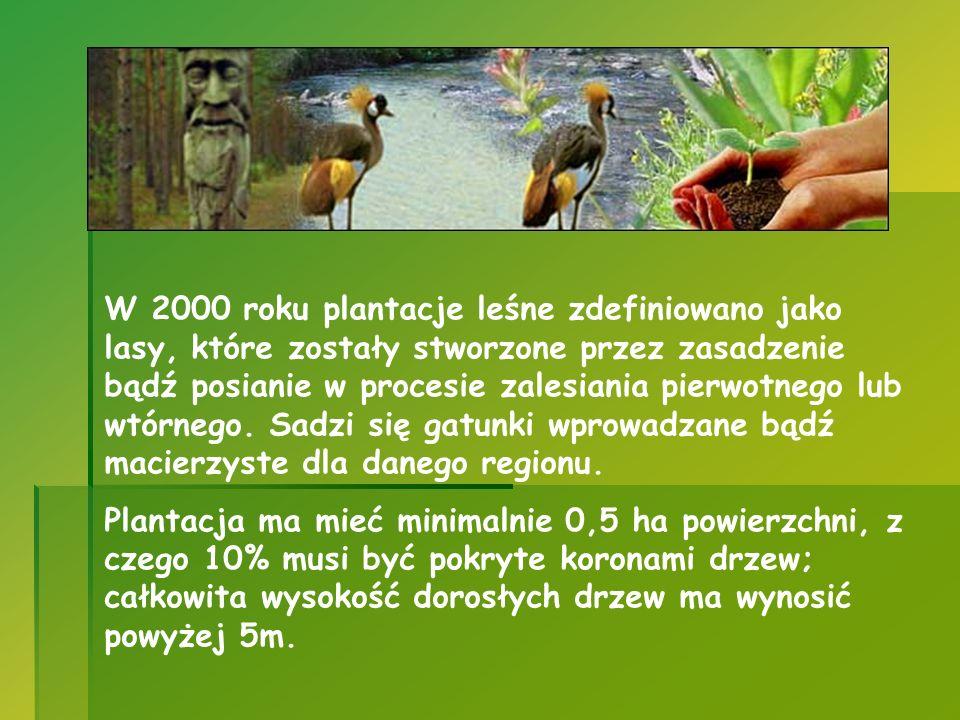 W 2000 roku plantacje leśne zdefiniowano jako lasy, które zostały stworzone przez zasadzenie bądź posianie w procesie zalesiania pierwotnego lub wtórnego. Sadzi się gatunki wprowadzane bądź macierzyste dla danego regionu.