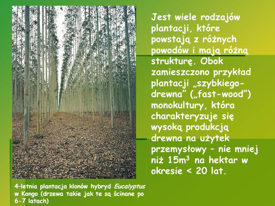 """Jest wiele rodzajów plantacji, które powstają z różnych powodów i mają różną strukturę. Obok zamieszczono przykład plantacji """"szybkiego-drewna (""""fast-wood ) monokultury, która charakteryzuje się wysoką produkcją drewna na użytek przemysłowy – nie mniej niż 15m3 na hektar w okresie < 20 lat."""