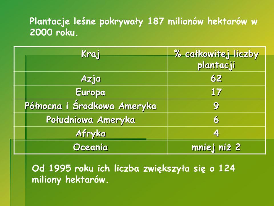 % całkowitej liczby plantacji Północna i Środkowa Ameryka