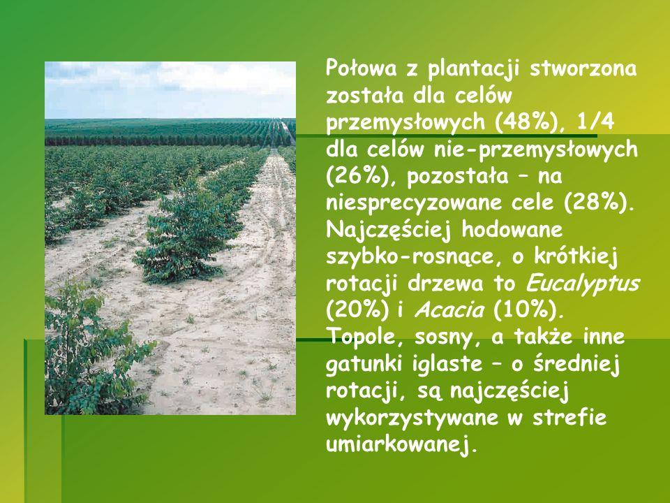 Połowa z plantacji stworzona została dla celów przemysłowych (48%), 1/4 dla celów nie-przemysłowych (26%), pozostała – na niesprecyzowane cele (28%).