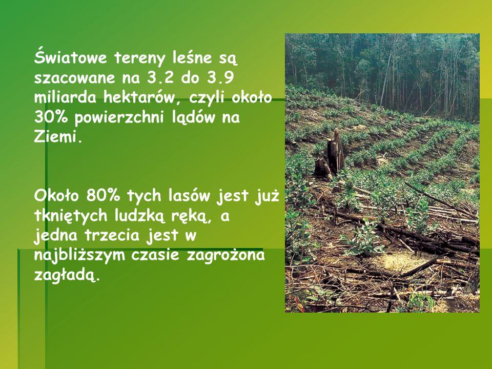 Światowe tereny leśne są szacowane na 3. 2 do 3