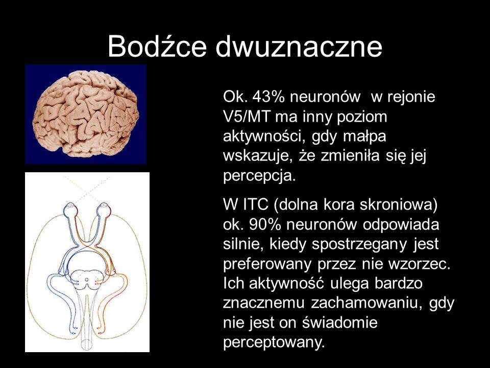 Bodźce dwuznaczne Ok. 43% neuronów w rejonie V5/MT ma inny poziom aktywności, gdy małpa wskazuje, że zmieniła się jej percepcja.