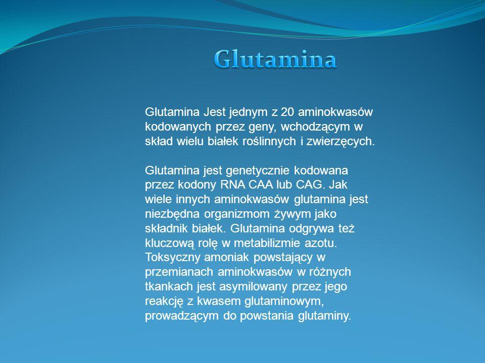 Glutamina Glutamina Jest jednym z 20 aminokwasów kodowanych przez geny, wchodzącym w skład wielu białek roślinnych i zwierzęcych.