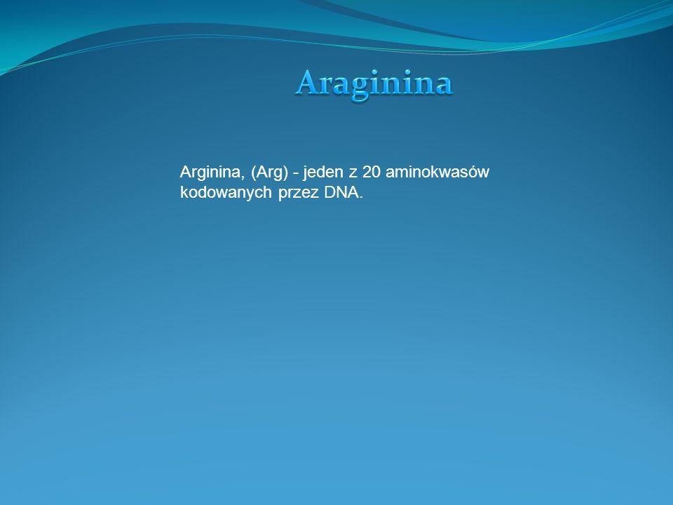 Araginina Arginina, (Arg) - jeden z 20 aminokwasów kodowanych przez DNA.