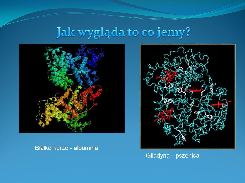 Jak wygląda to co jemy Białko kurze - albumina Gliadyna - pszenica