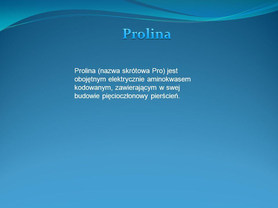 Prolina Prolina (nazwa skrótowa Pro) jest obojętnym elektrycznie aminokwasem kodowanym, zawierającym w swej budowie pięcioczłonowy pierścień.