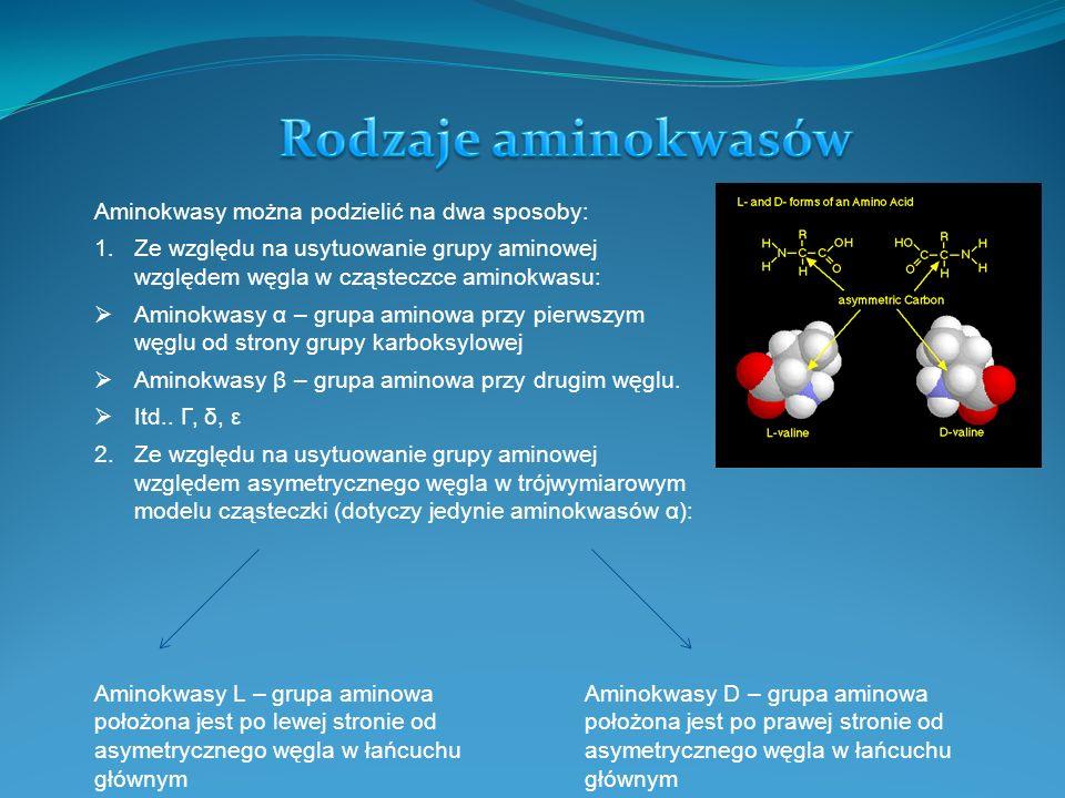 Rodzaje aminokwasów Aminokwasy można podzielić na dwa sposoby: