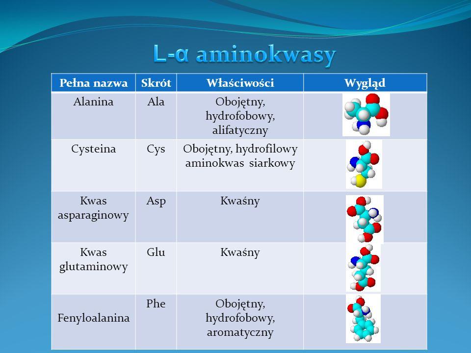 L-α aminokwasy Pełna nazwa Skrót Właściwości Wygląd Alanina Ala