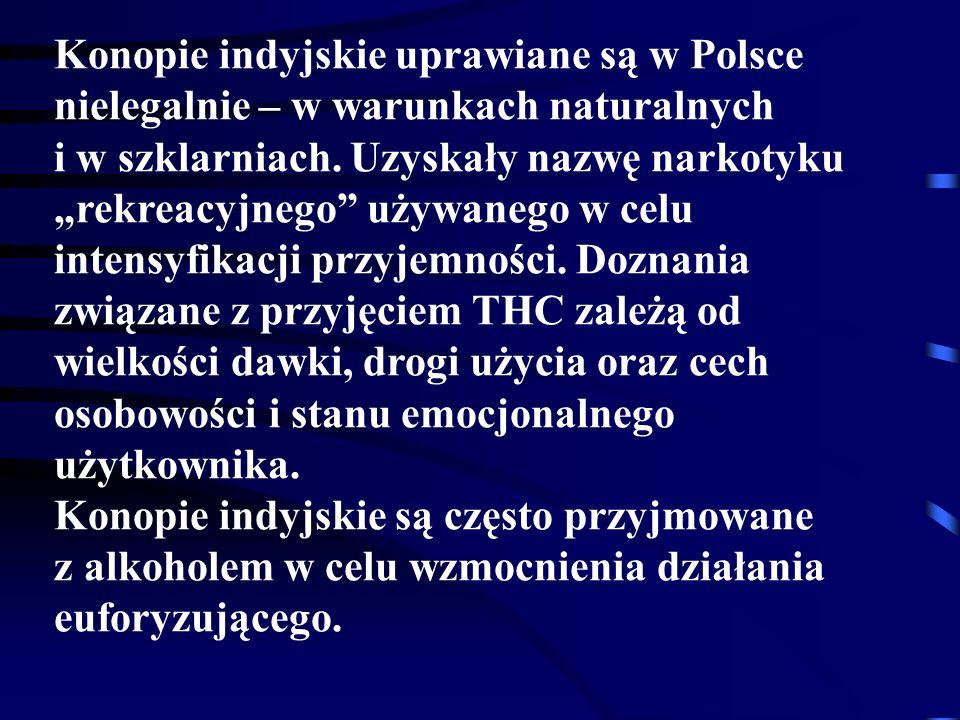 Konopie indyjskie uprawiane są w Polsce nielegalnie – w warunkach naturalnych