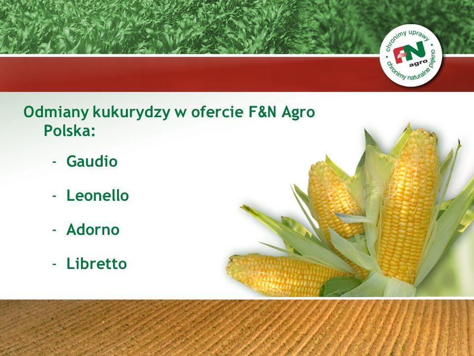 Odmiany kukurydzy w ofercie F&N Agro Polska: