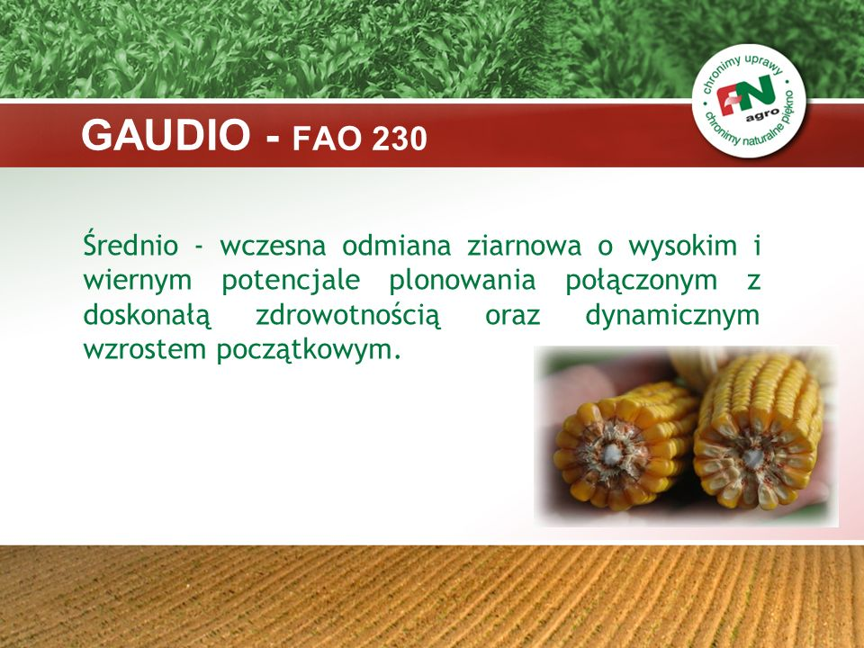 GAUDIO - FAO 230