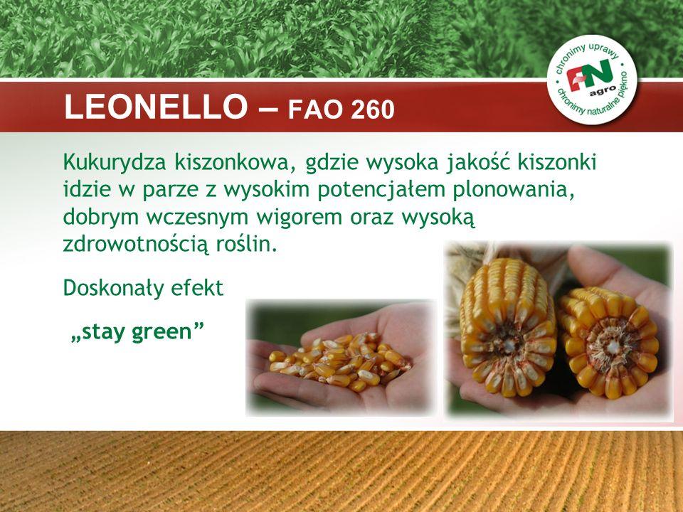LEONELLO – FAO 260