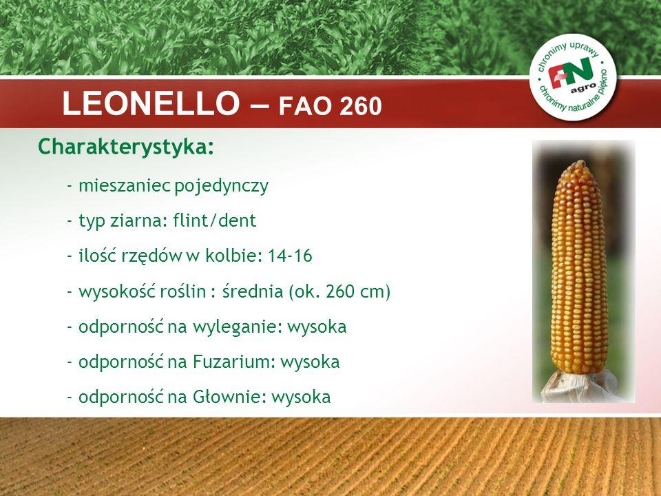 LEONELLO – FAO 260 Charakterystyka: - mieszaniec pojedynczy