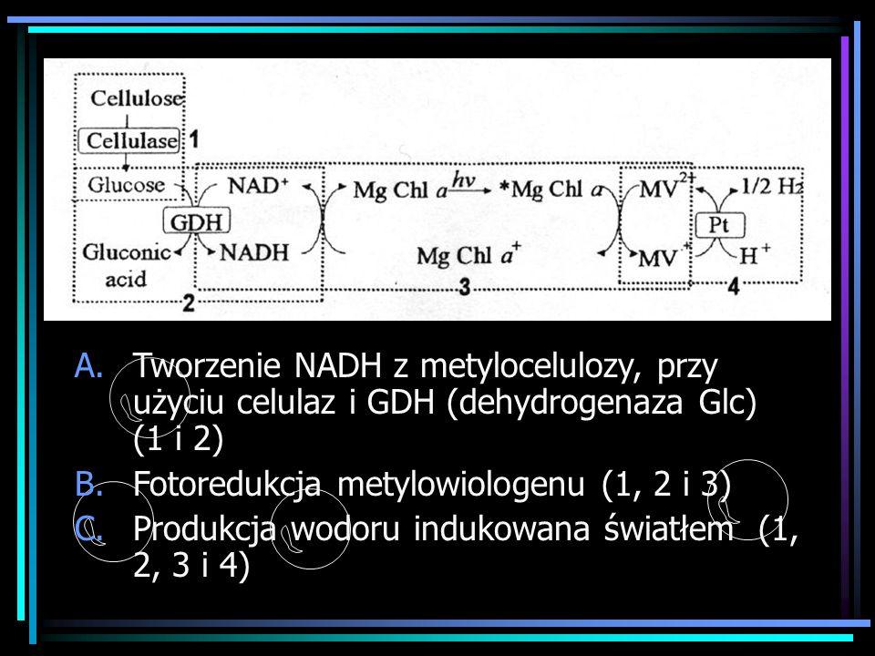 Tworzenie NADH z metylocelulozy, przy użyciu celulaz i GDH (dehydrogenaza Glc) (1 i 2)