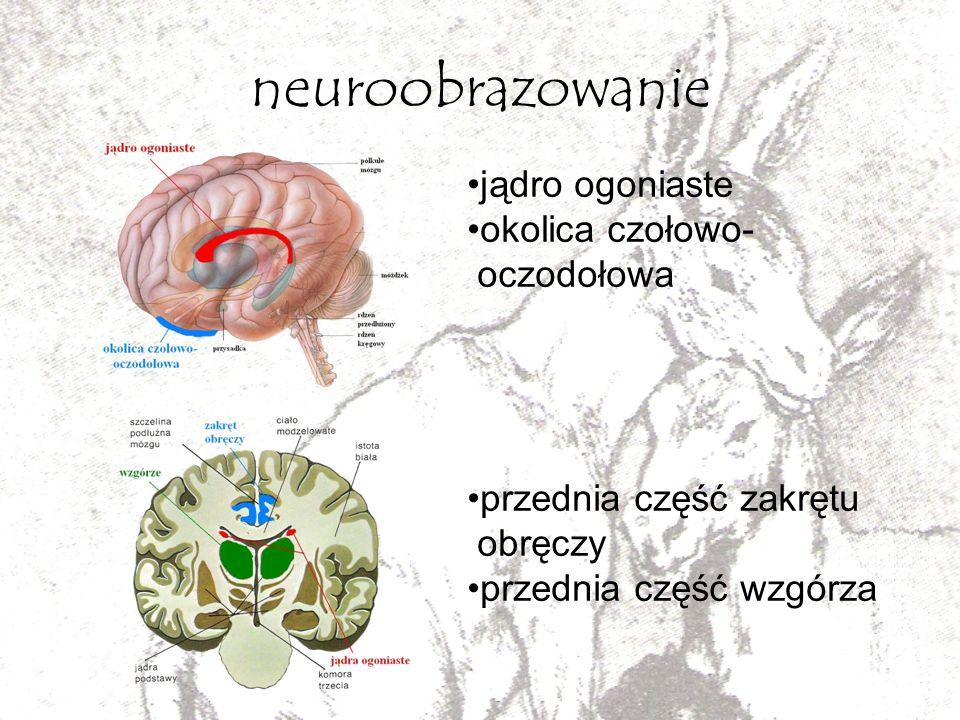 neuroobrazowanie jądro ogoniaste okolica czołowo- oczodołowa
