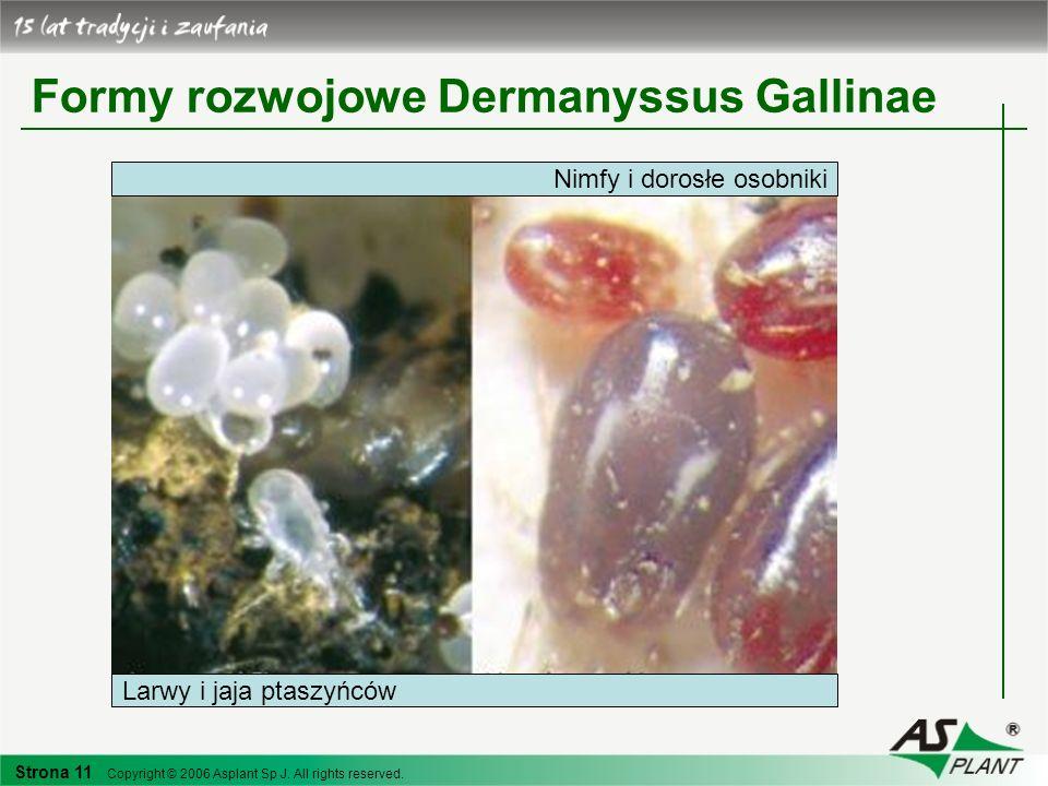 Formy rozwojowe Dermanyssus Gallinae