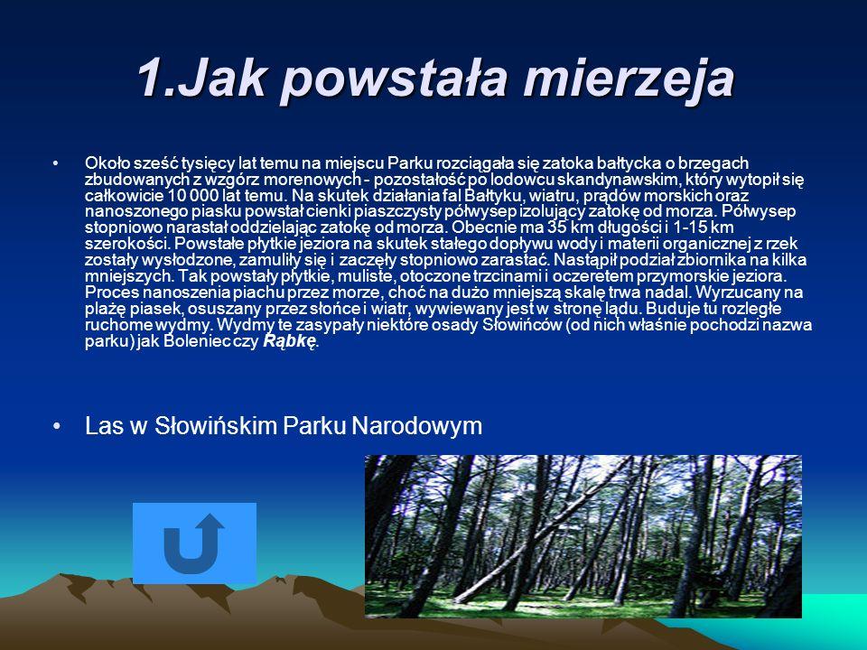 1.Jak powstała mierzeja Las w Słowińskim Parku Narodowym