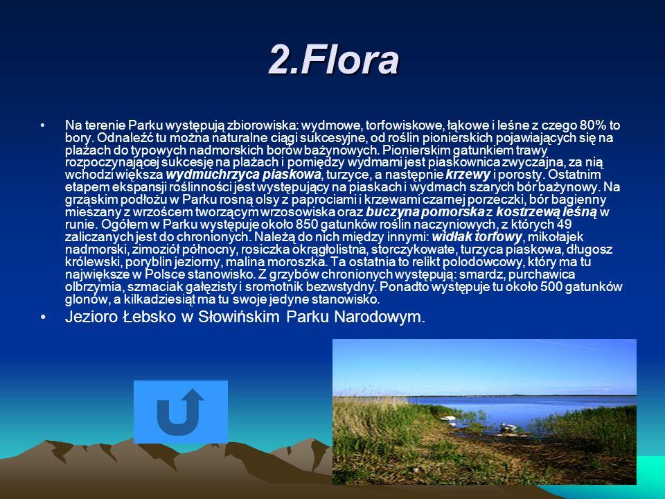 2.Flora Jezioro Łebsko w Słowińskim Parku Narodowym.