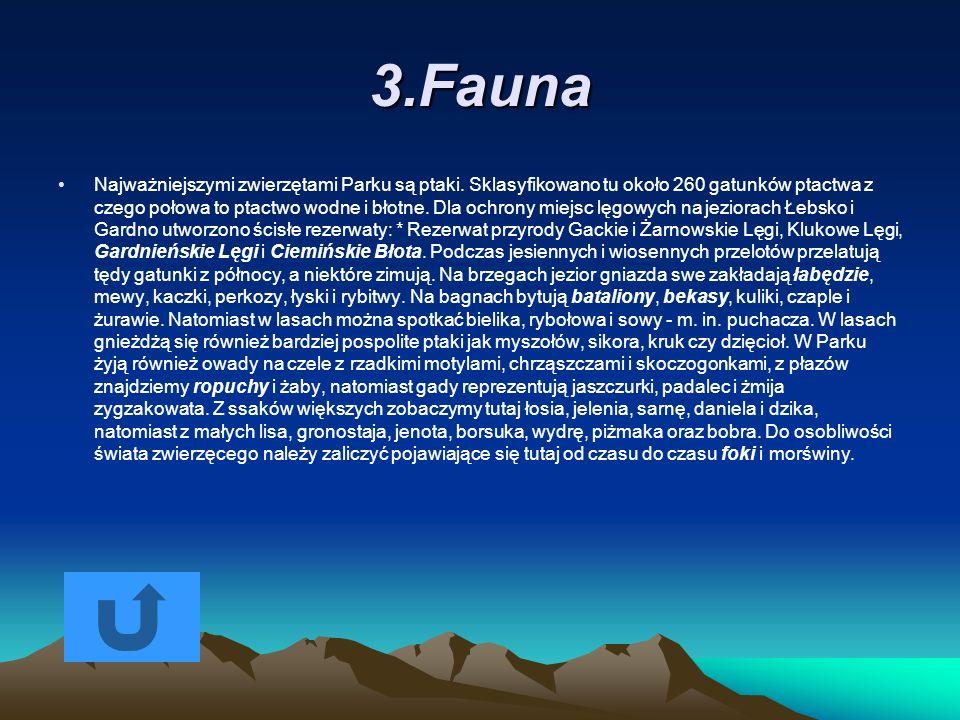 3.Fauna
