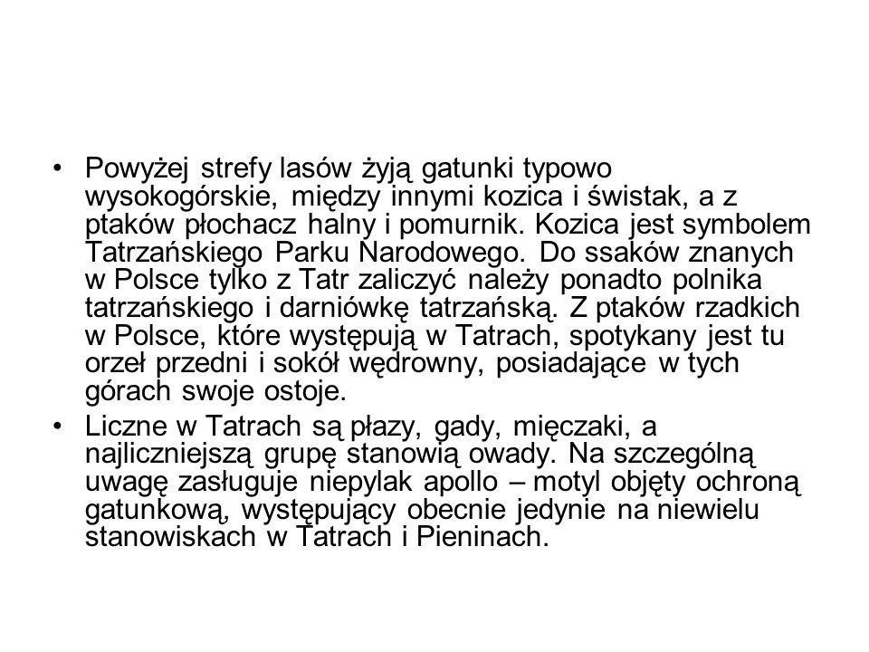 Powyżej strefy lasów żyją gatunki typowo wysokogórskie, między innymi kozica i świstak, a z ptaków płochacz halny i pomurnik. Kozica jest symbolem Tatrzańskiego Parku Narodowego. Do ssaków znanych w Polsce tylko z Tatr zaliczyć należy ponadto polnika tatrzańskiego i darniówkę tatrzańską. Z ptaków rzadkich w Polsce, które występują w Tatrach, spotykany jest tu orzeł przedni i sokół wędrowny, posiadające w tych górach swoje ostoje.