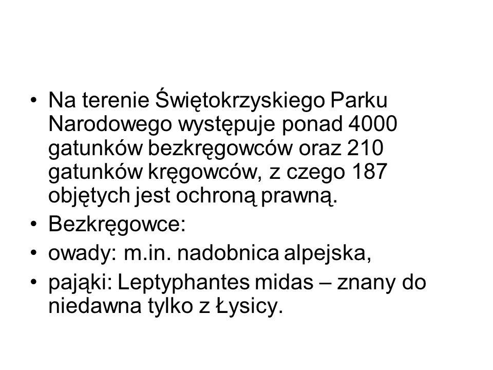 Na terenie Świętokrzyskiego Parku Narodowego występuje ponad 4000 gatunków bezkręgowców oraz 210 gatunków kręgowców, z czego 187 objętych jest ochroną prawną.