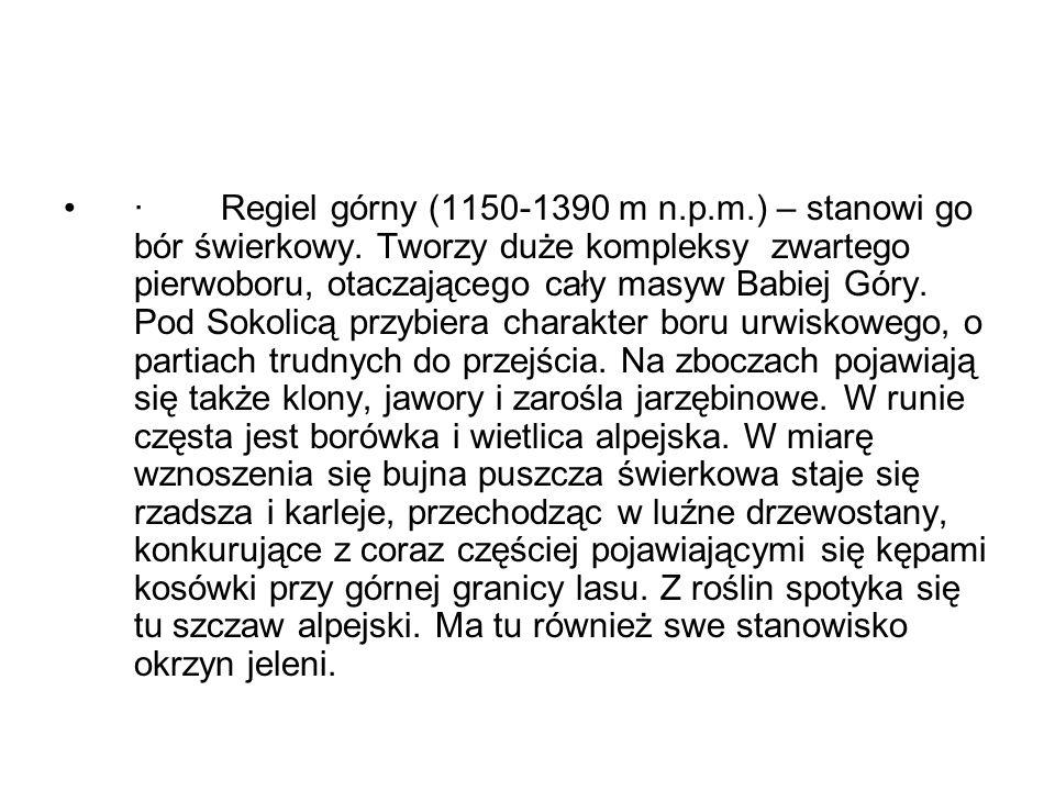 · Regiel górny (1150-1390 m n. p. m. ) – stanowi go bór świerkowy