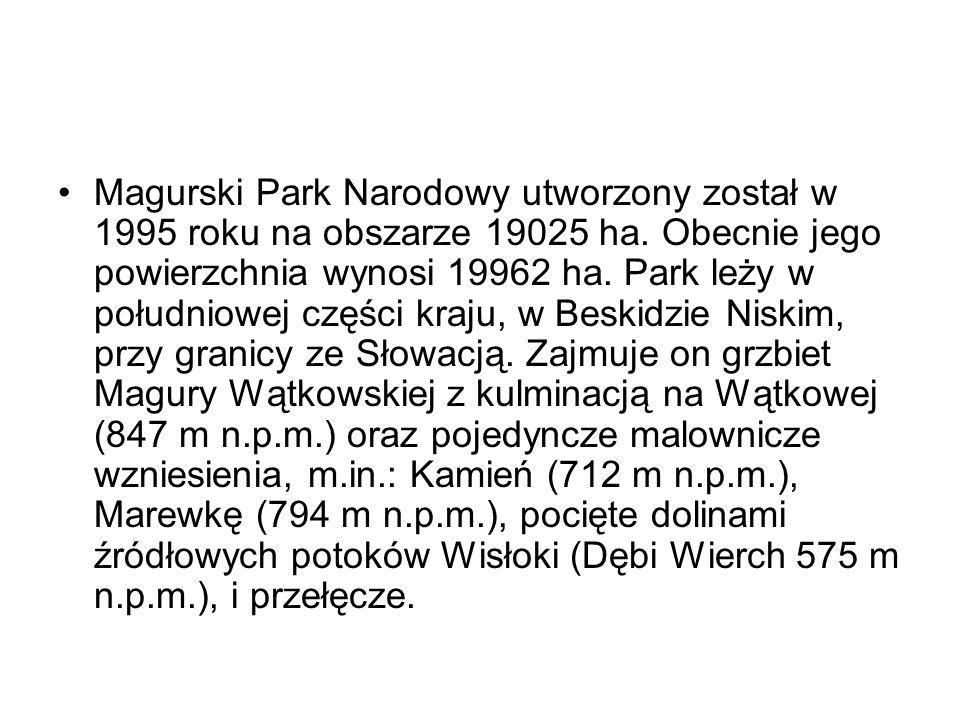 Magurski Park Narodowy utworzony został w 1995 roku na obszarze 19025 ha.