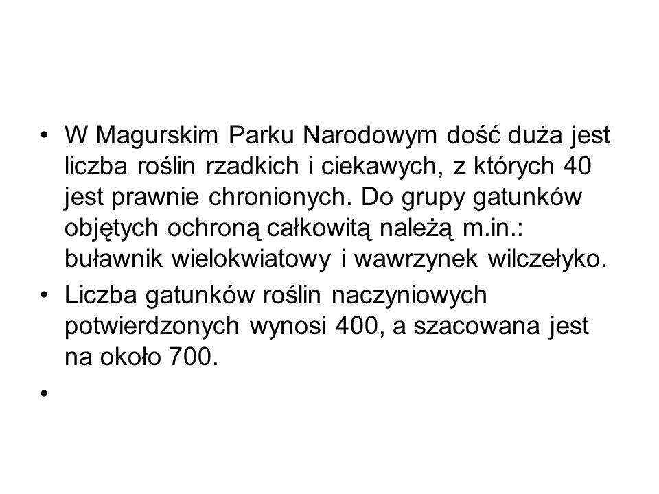 W Magurskim Parku Narodowym dość duża jest liczba roślin rzadkich i ciekawych, z których 40 jest prawnie chronionych. Do grupy gatunków objętych ochroną całkowitą należą m.in.: buławnik wielokwiatowy i wawrzynek wilczełyko.