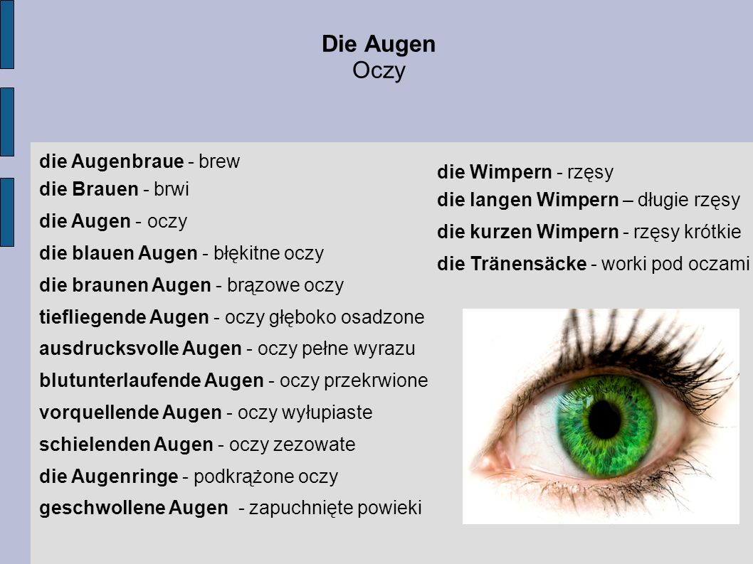 Die Augen Oczy die Augenbraue - brew die Brauen - brwi