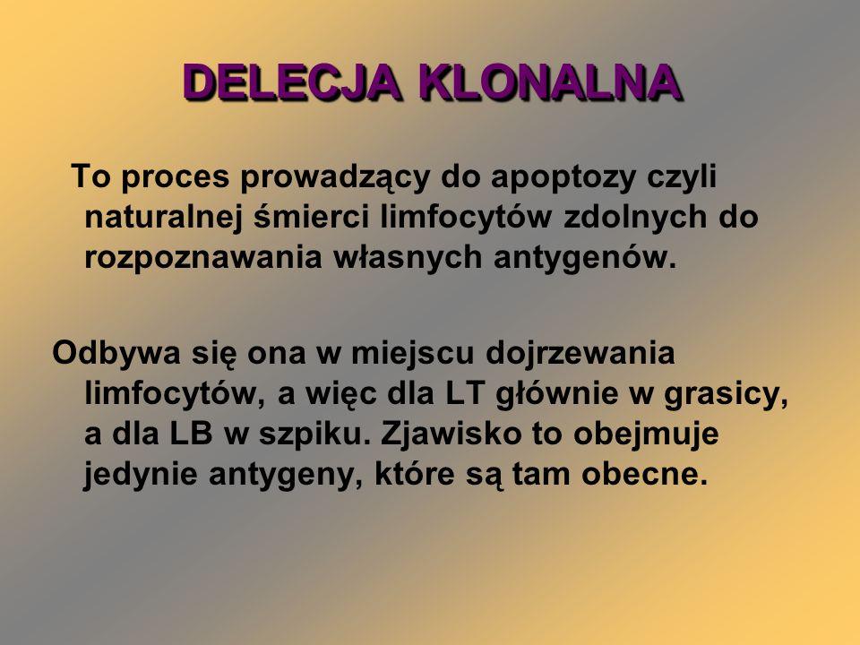 DELECJA KLONALNA To proces prowadzący do apoptozy czyli naturalnej śmierci limfocytów zdolnych do rozpoznawania własnych antygenów.