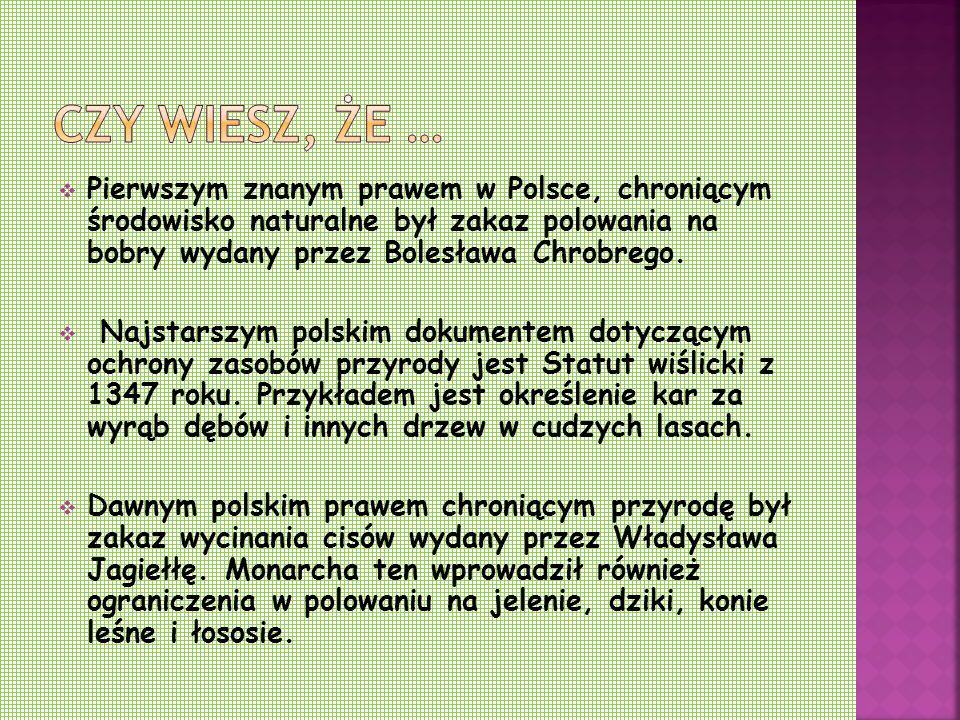 Czy wiesz, że … Pierwszym znanym prawem w Polsce, chroniącym środowisko naturalne był zakaz polowania na bobry wydany przez Bolesława Chrobrego.
