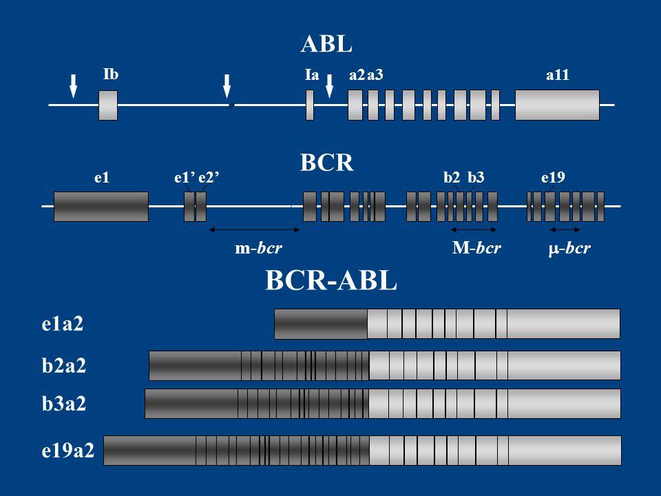 BCR-ABL ABL BCR e1a2 b2a2 b3a2 e19a2 m-bcr M-bcr -bcr Ib Ia a2 a3 a11