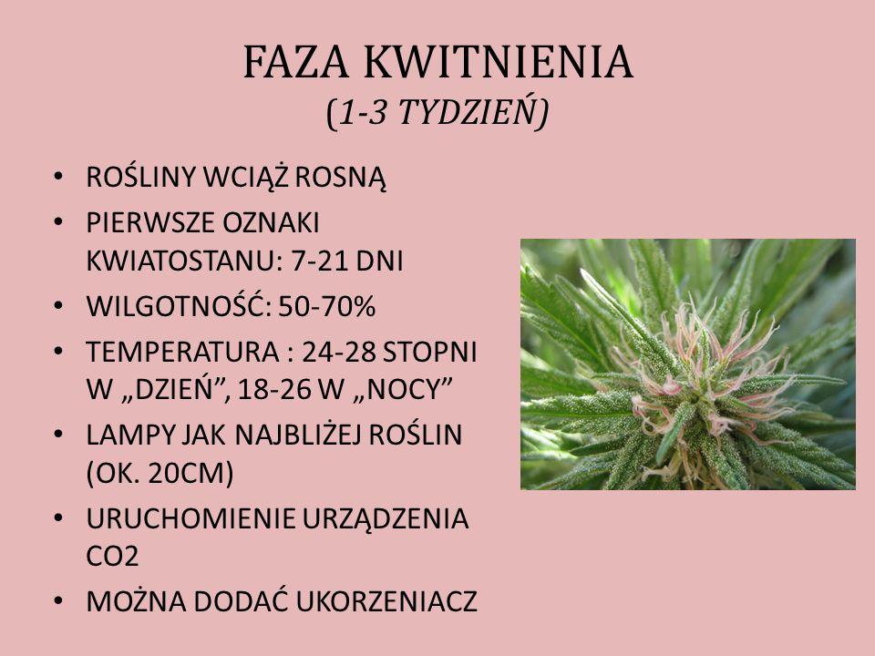 FAZA KWITNIENIA (1-3 TYDZIEŃ)
