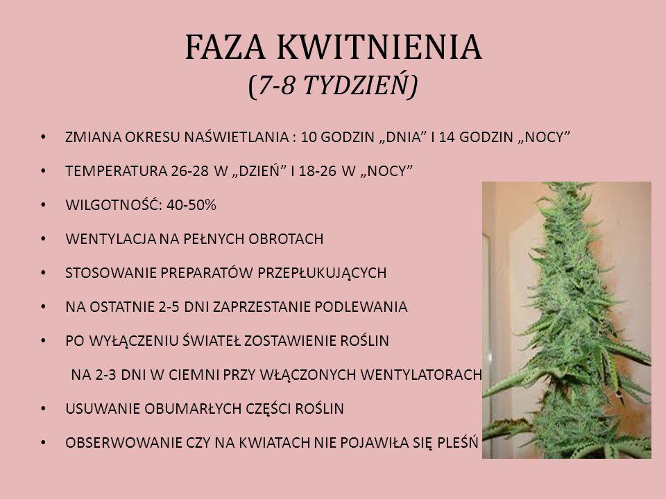 FAZA KWITNIENIA (7-8 TYDZIEŃ)