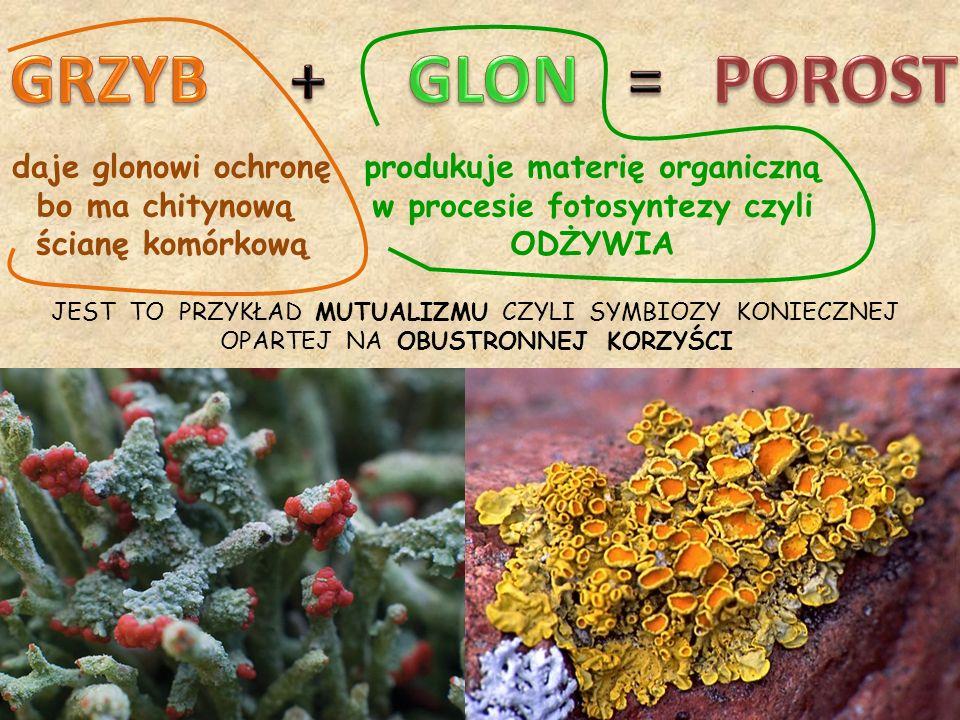 produkuje materię organiczną w procesie fotosyntezy czyli