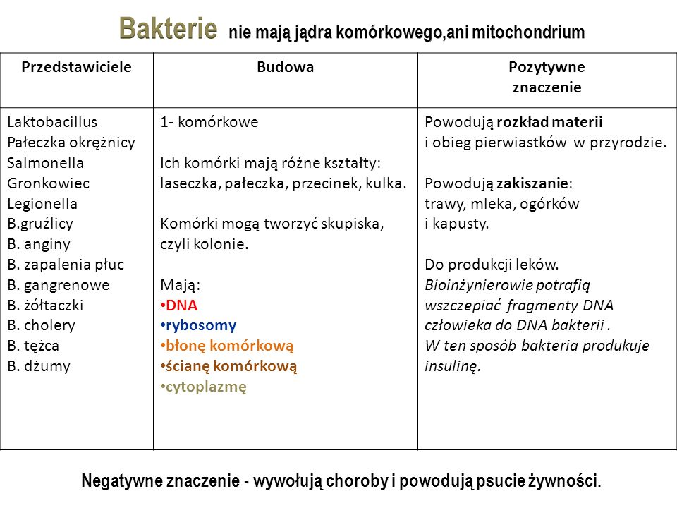 Bakterie nie mają jądra komórkowego,ani mitochondrium