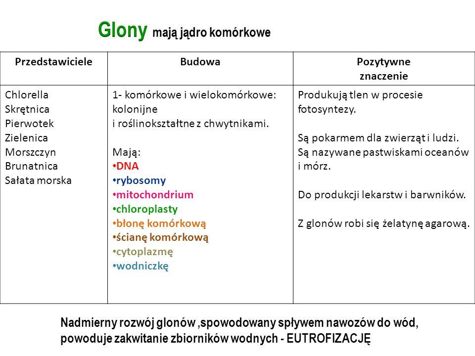 Glony mają jądro komórkowe