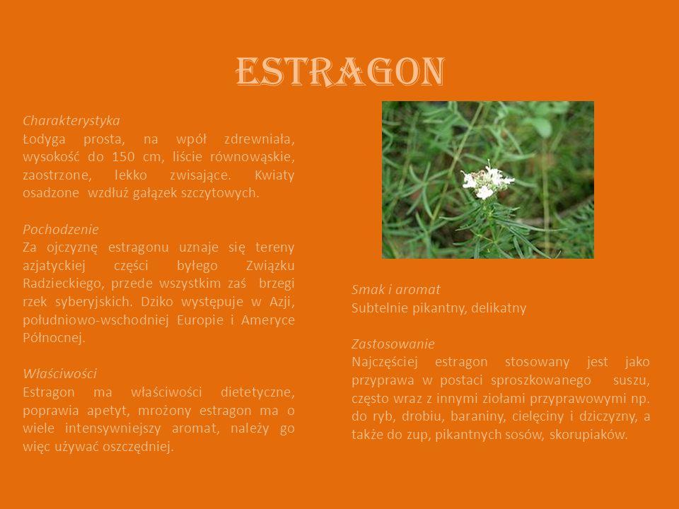 Estragon Charakterystyka