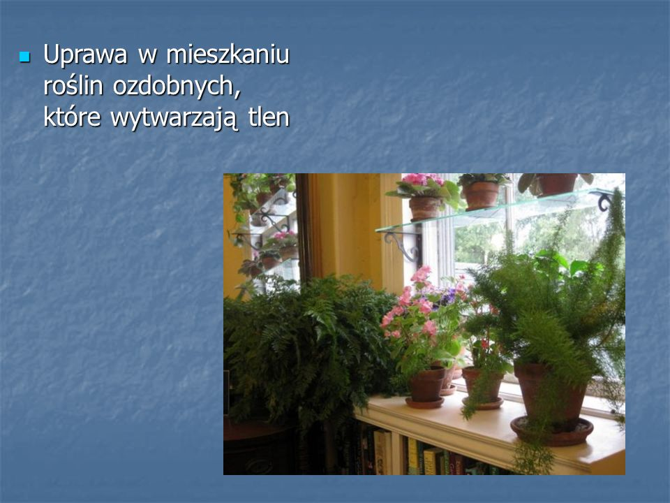 Uprawa w mieszkaniu roślin ozdobnych, które wytwarzają tlen