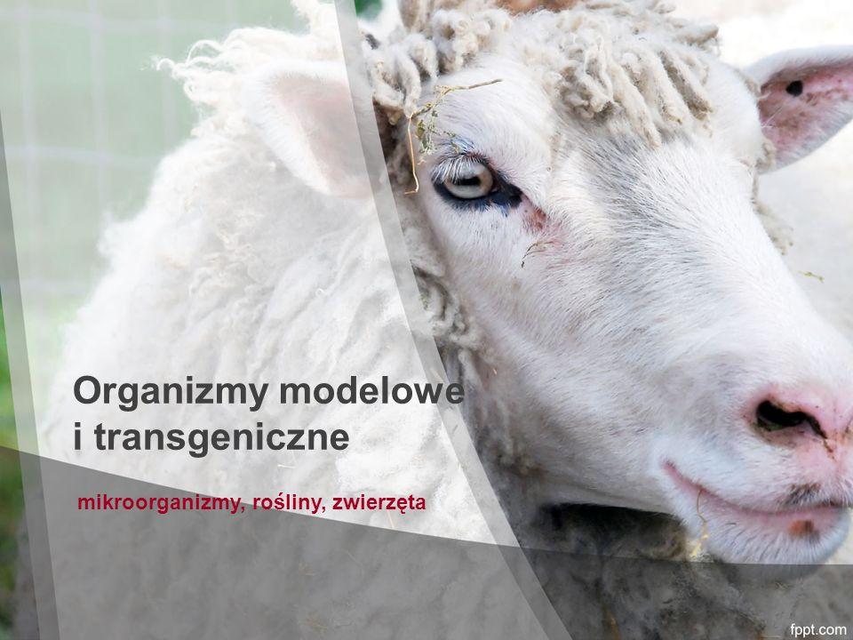 Organizmy modelowe i transgeniczne