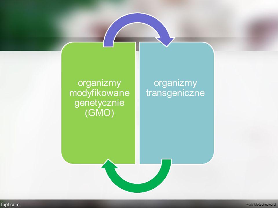 www.biotechnolog.pl organizmy modyfikowane genetycznie (GMO)