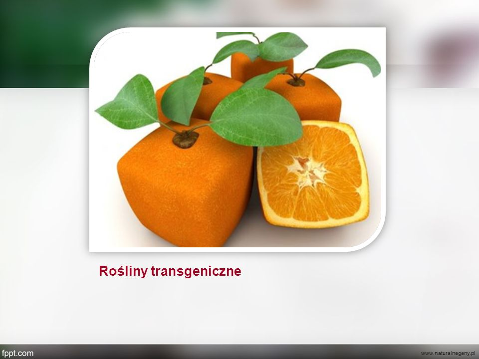 Rośliny transgeniczne
